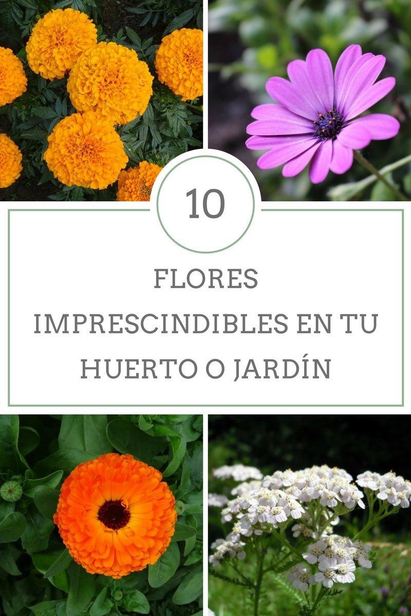flores imprescindibles en tu huerto o jardín