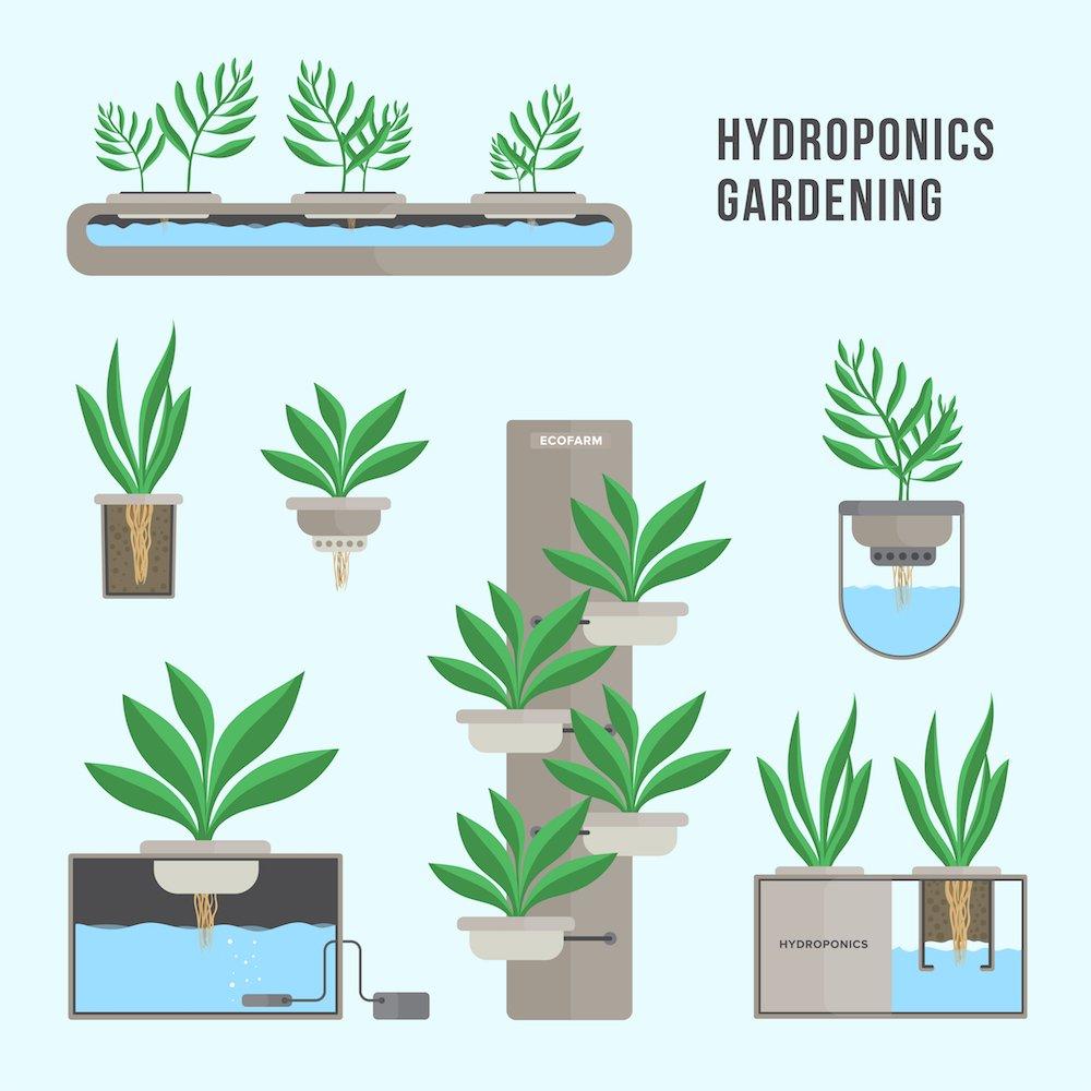 Cómo es un huerto hidropónico