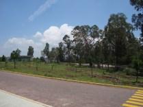 Vista del arboretum (2). (Foto: Juan Martínez Cruz)