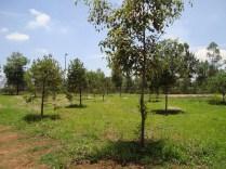 Vista del arboretum. (Foto: Juan Martínez Cruz)