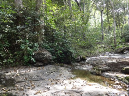 Bosque Manaure 2