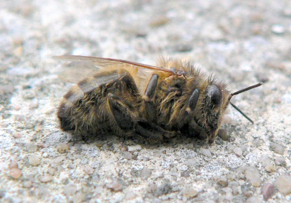 Le api scarseggiano