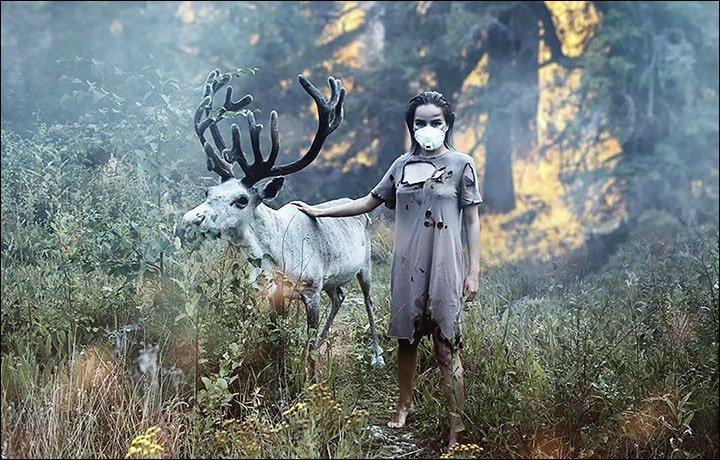 Disboscamento foreste