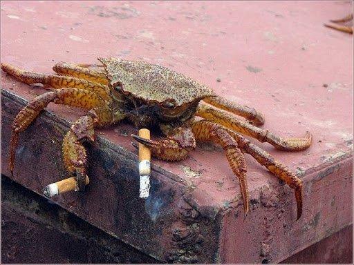 inquinamento sigarette