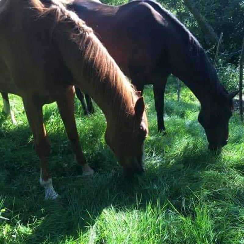 chevaux-ecole-de-couverte