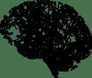 Cerveau arborescence