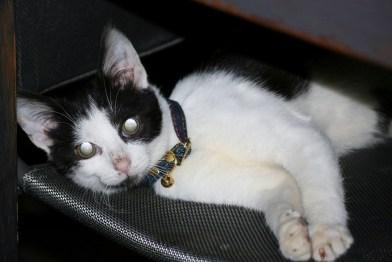 Mahru, adopté en janvier 2017.jpg