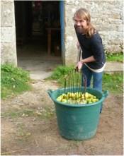 lavage des pommes fw