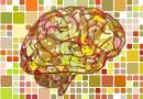 Neurosciences : les amis et les ennemis du cerveau des élèves