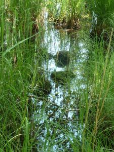 Etang du Rousset - Zone Natura 2000