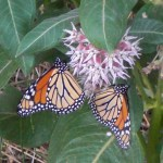 landscape design near me raises property value and attracts butterflies
