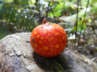 Funky liana fruit
