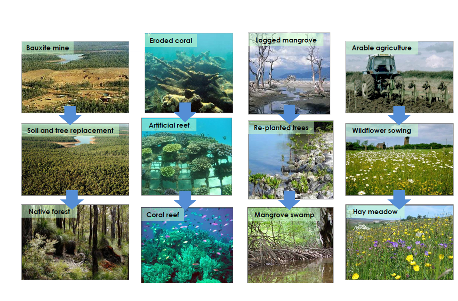 How Good Are We At Restoring Ecosystem Services Ecology