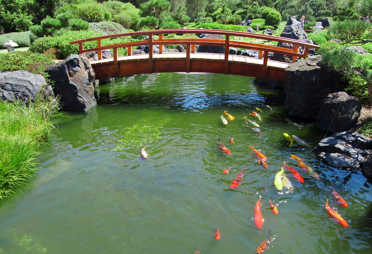 hight resolution of diy build a natural fish pond in your backyard