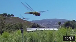 July 29, 2013 The Bugs Are Back In Town: Dragonflies Swarm Malibu Lagoon.  Watch their spectacular flight.  Dragonflies eat mosquitos, bees, flies, wasps and ants. They are an important source of food for birds, frogs, fish and other dragon flies.   NOTE: Click on image to see video.