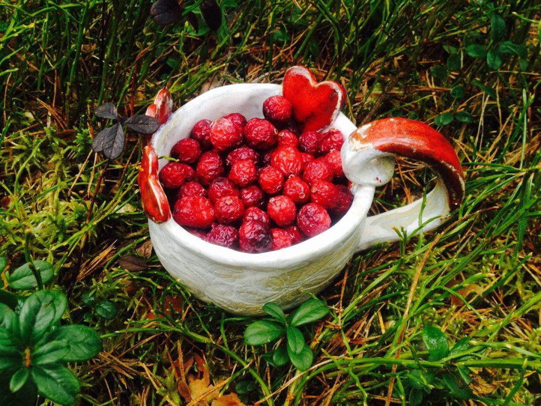Aeglase kuivatuse võlu – vitamiinid säilivad