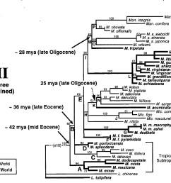 phylogenetic tree of selected magnolia species m dodecapetala m ovata m  [ 1260 x 905 Pixel ]