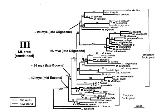 small resolution of phylogenetic tree of selected magnolia species m dodecapetala m ovata m