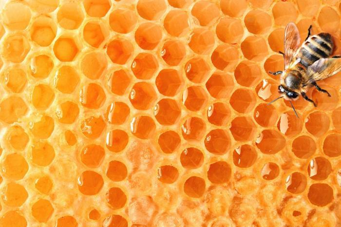 """Como abejas al panal: 4 formas de """"atrapar"""" a los Millennials sin que lo sospechen"""