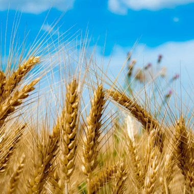 Landbouw & voeding