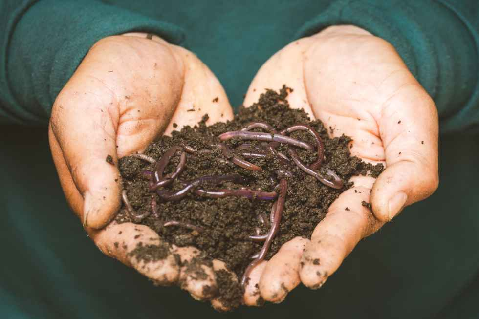 earthworms on a persons hand great food from home composting to help the earth and soil to help your sustainable new year resolutions