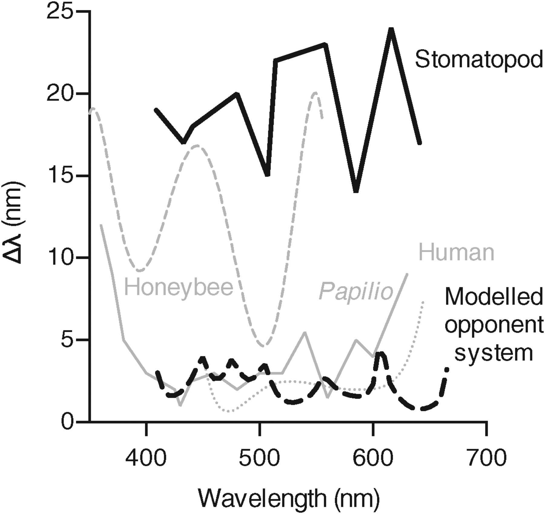 Three Isn T Enough A Dozen Photoreceptor Types In Mantis
