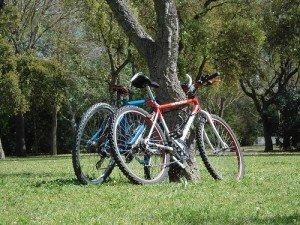 Dos bicicletas junto a un árbol.