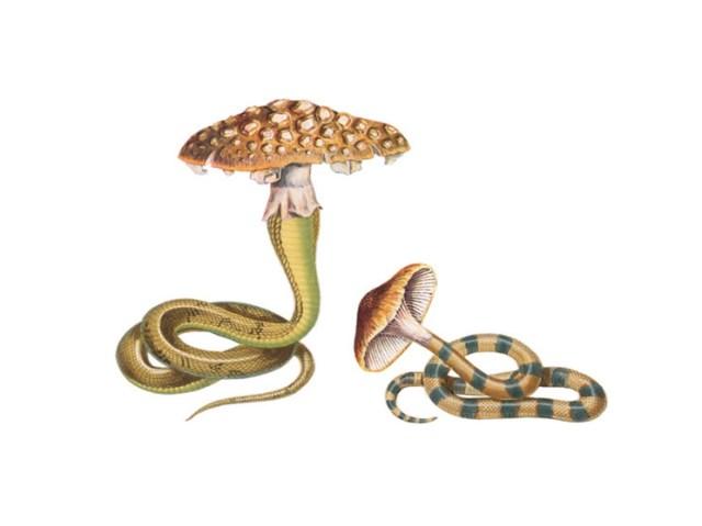 Энергия грибов: самая большая тайна