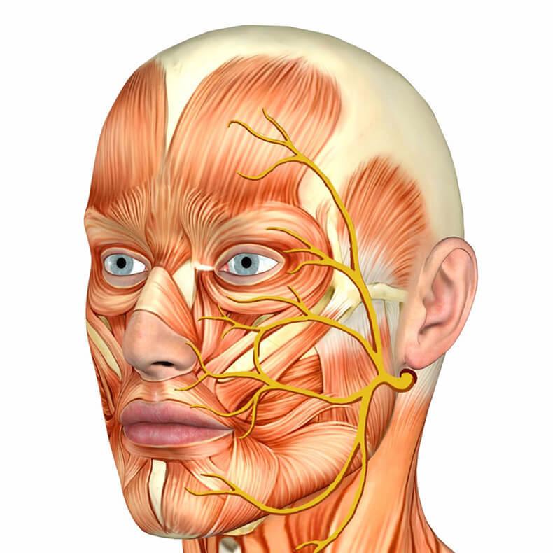Невралгия тройничного нерва — худшая боль в мире: 5 ключевых моментов