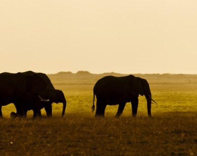 Weekly Economic News Roundup and wildlife conservation