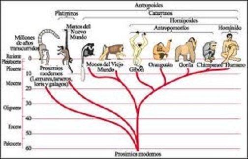 La evolución de los seres vivos mediante el proceso de selección natural
