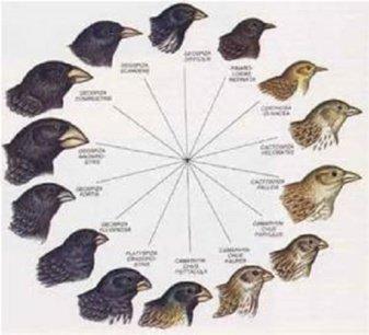 La Gran Idea: la evolución se produce por selección natural