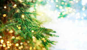 Activités gratuites décembre