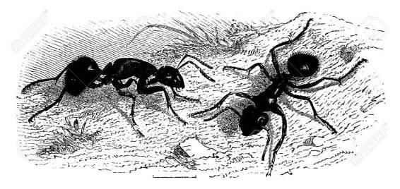 La imagen tiene un atributo ALT vacío; su nombre de archivo es 41784786-hormigas-muy-grandes-a%C3%B1ada-una-ilustraci%C3%B3n-grabada-la-vie-dans-la-nature-1890-.jpg