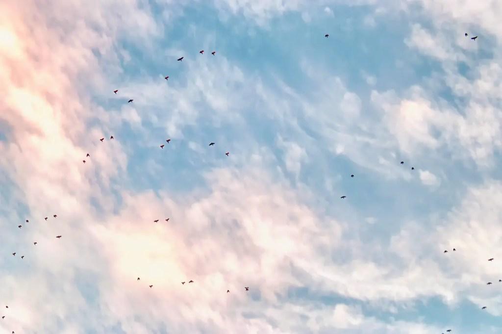 clouds, sky, migration
