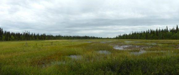 Viikusjärvi