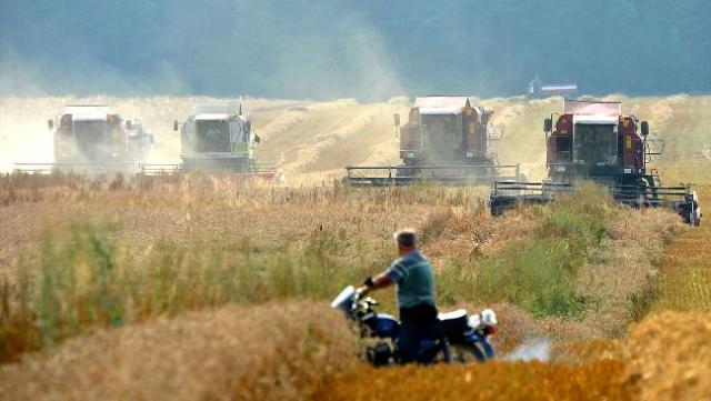 original_belarus-agriculture-wheat-harvest