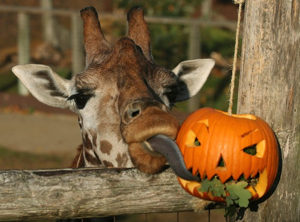 Britain Halloween Zoo