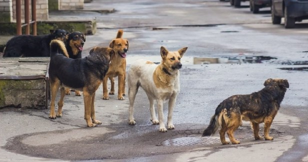 johor-assemblyman-suggests-selling-stray-dogs-to-south-koreas-dog-meat-market-world-of-buzz-3