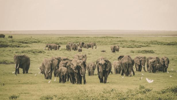 animals-adapting_elephant-herd-min