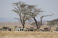 Serengeti Safari-Stau 1 © Win Schumacher Weltwege