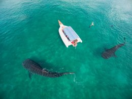 """Mafia Island, Coast Province, Tanzania""Aerial view of whale sharks and tourists."
