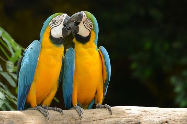 animals-in-brazil