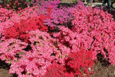 Brooklyn Botanical Garden- Spring- by Edwin Martinez via Flickr