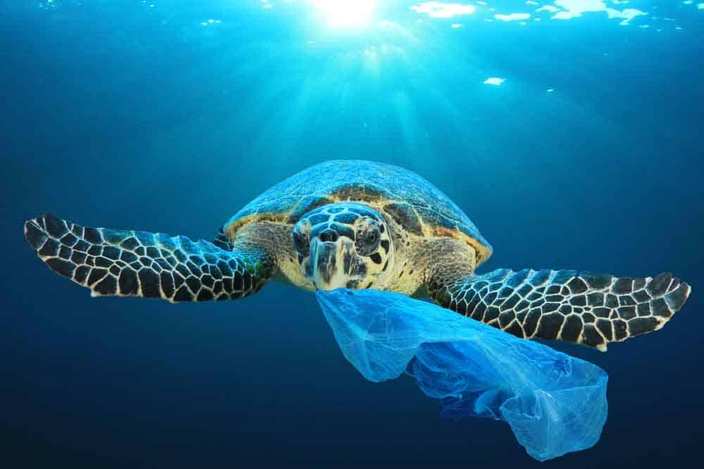 plastic pollution in turtle's mouth