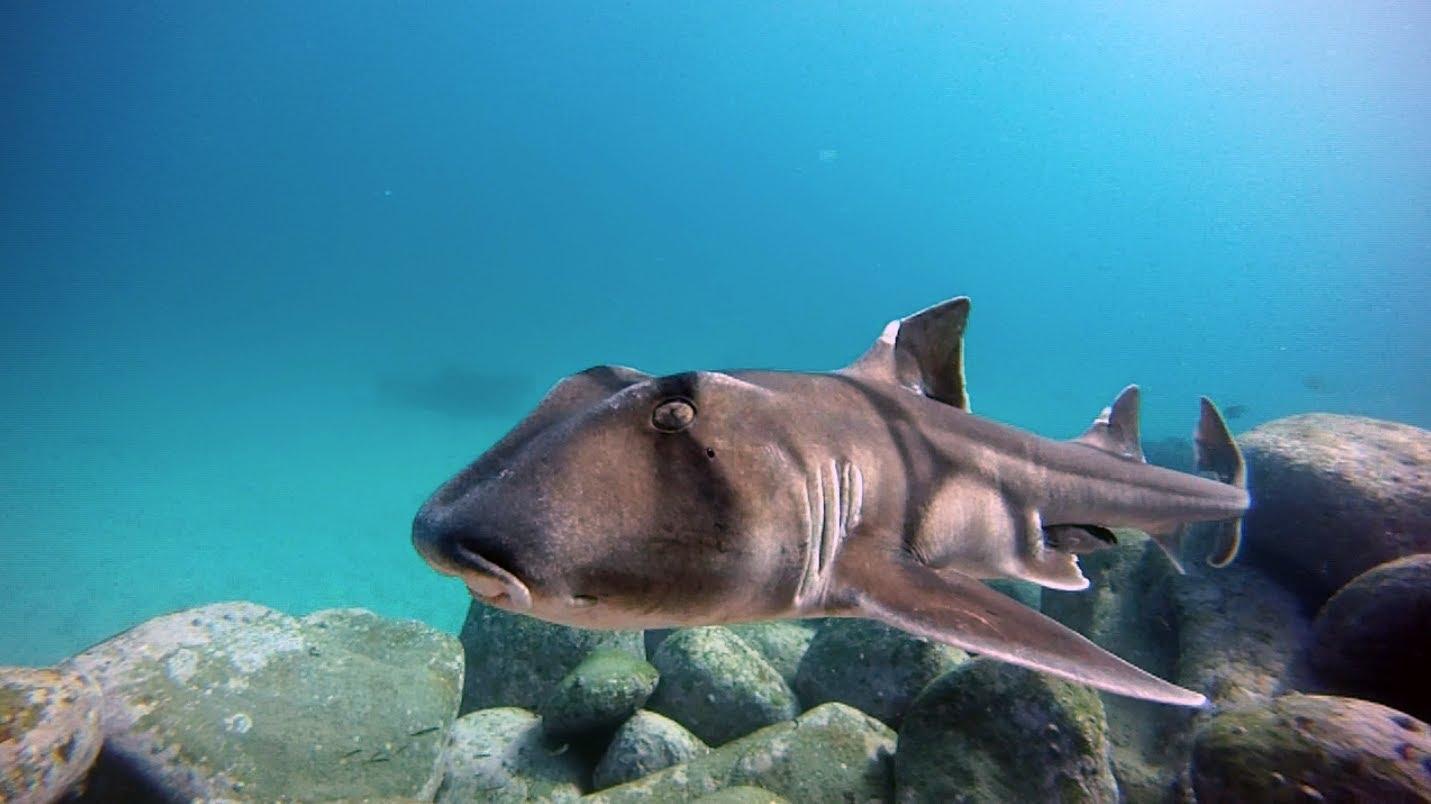 напугал акулы всех видов фото с названиями изобрели