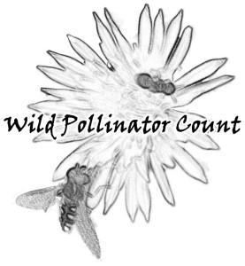 Wild Pollinator Count
