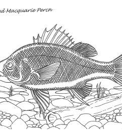 line diagram macquarie perch maree smzalko [ 2480 x 1748 Pixel ]