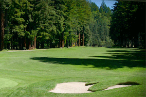 Northwood Golf Club, redwoods