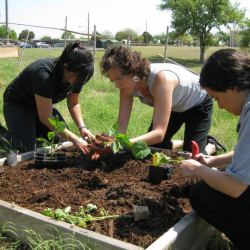 EcoRise Student Projects - Gardens and Native, Xeric Landscaping
